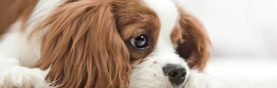Is Dog Food Really the Best Thing to Feed Your Pooch?