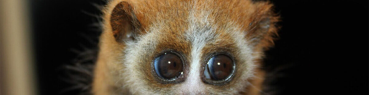 4 Reasons to Consider an Exotic Pet